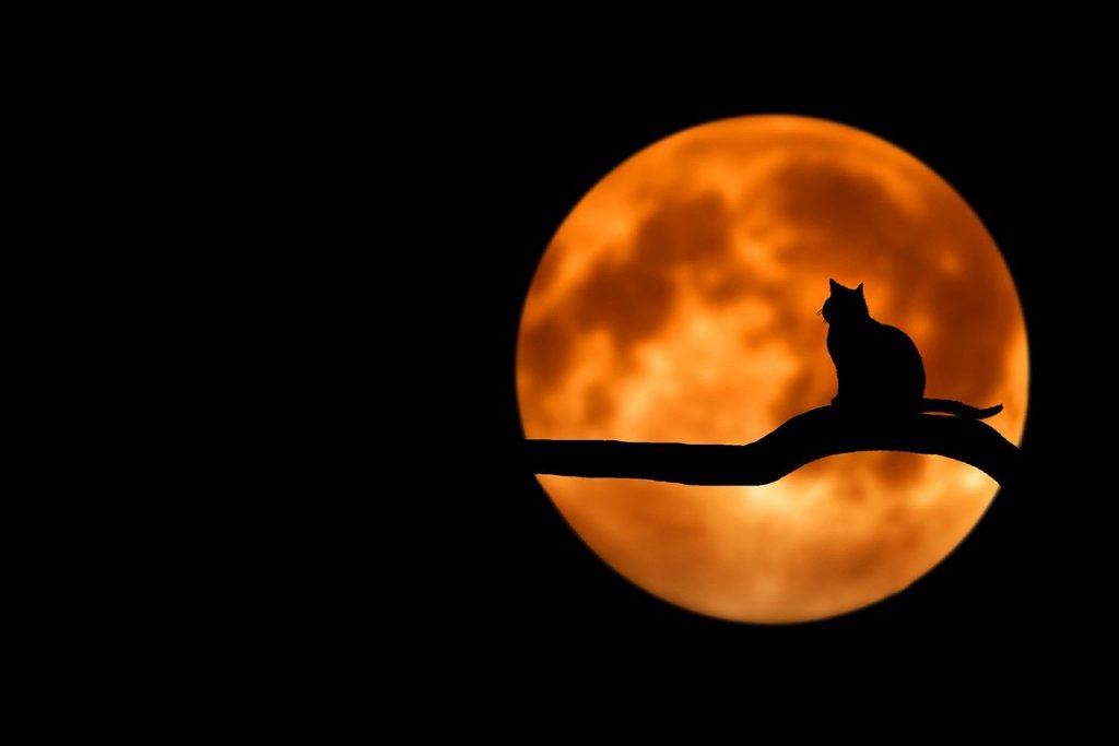 Cat, Moon